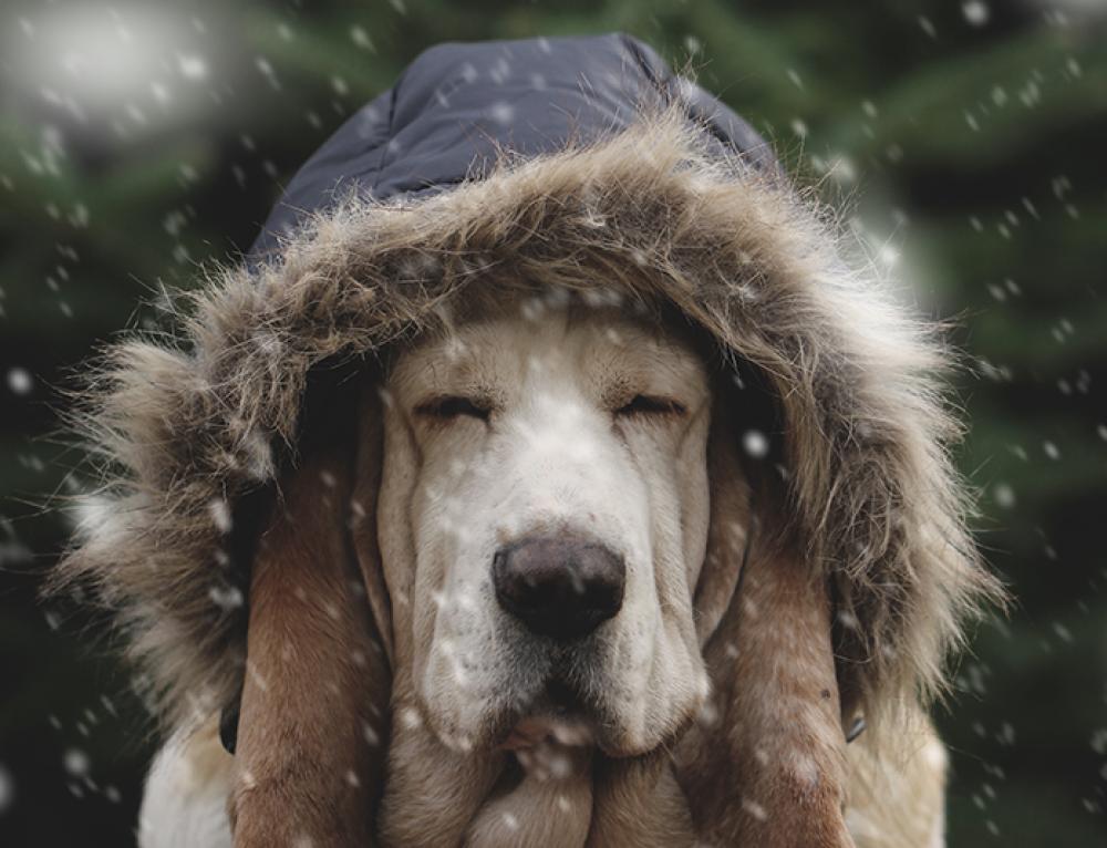Proteggere le articolazioni dei nostri quattrozampe, anche nei mesi più freddi