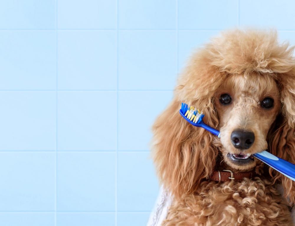 L'importanza dell'igiene orale nei cani