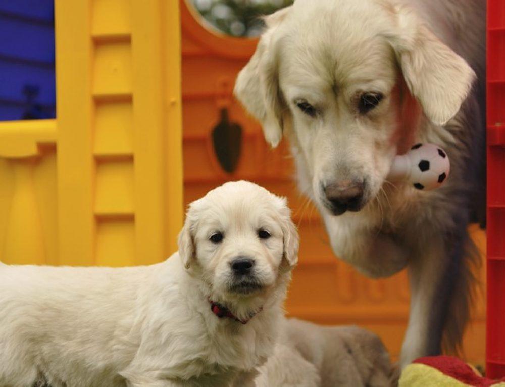 Adottare un cane cucciolo o adulto? o magari anziano?