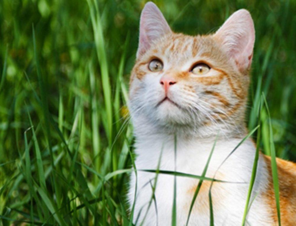 Come non farsi graffiare dal gatto